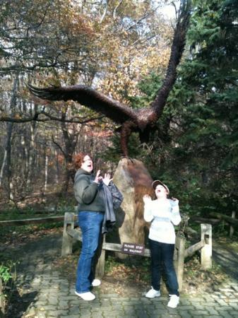Hawk Mountain Sanctuary: That's a big hawk!