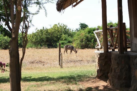 Manyatta Camp: The view between tents