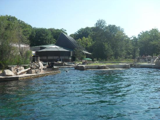Nuremberg Zoo : Delfin Lagune