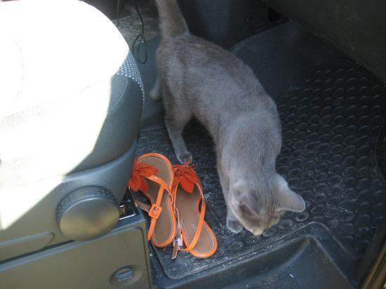 Mas la Vitalis : the cat, ready to travel with us!