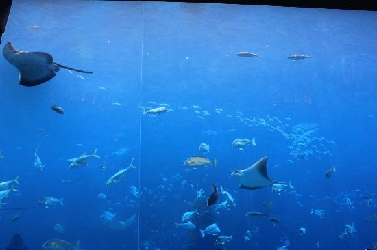 My Trip Dubai - Day Tours: aqua adventure in atlatis the bay