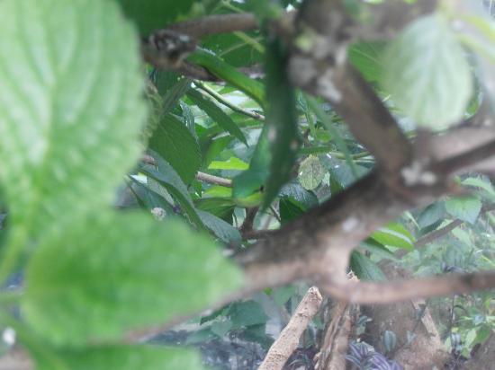Serpentario : Camuflaje