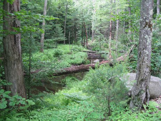 Crotched Mountain Resort & Spa: Nature Walk