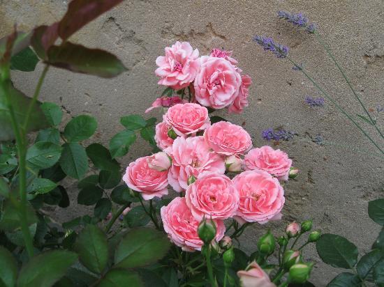 玫瑰民宿照片