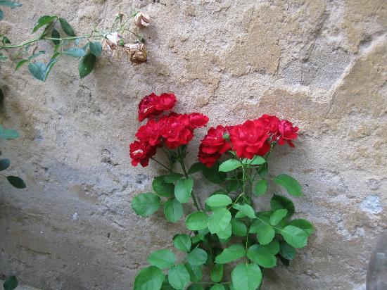 B&B Casa delle Rose: roses