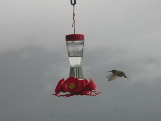 Riverview B&B: Humming birds on the veranda
