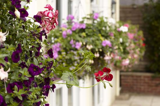 The Havelock: Our lovely garden & hanging baskets
