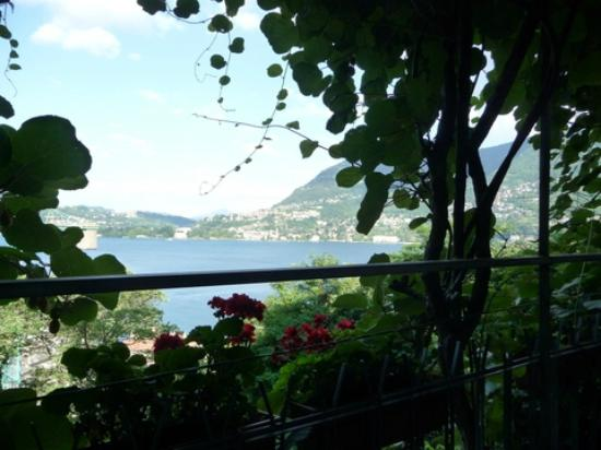 Edera Bed&Breakfast : The view from the terrace - underneath the kiwi-vines!