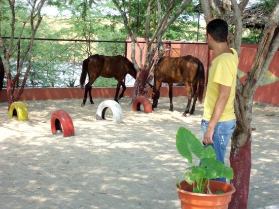 Turitanga: Os Cavalos perto do restaurante