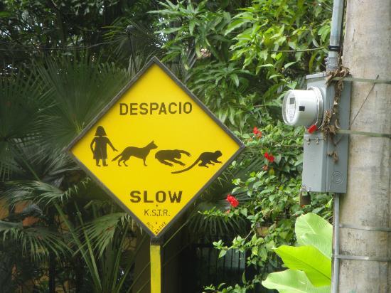 Arenas del Mar Beachfront and Rainforest Resort, Manuel Antonio, Costa Rica : signe particulier :)