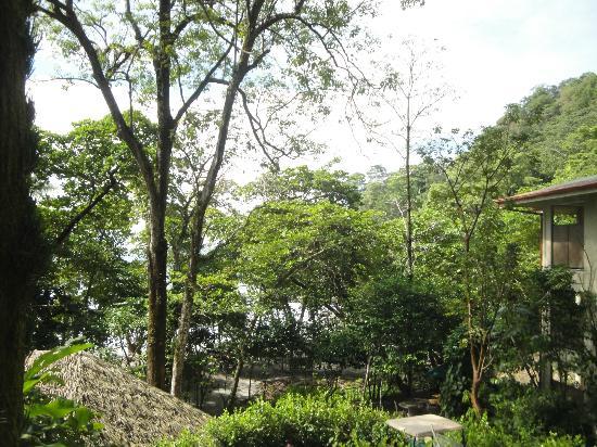 Arenas del Mar Beachfront & Rainforest Resort : vue des balcons