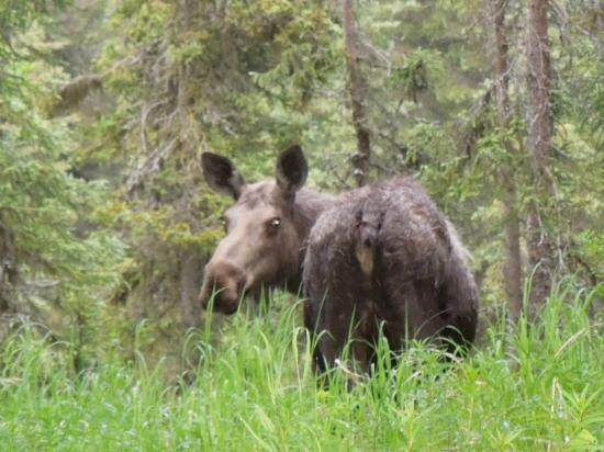 Escape For Two: mama moose