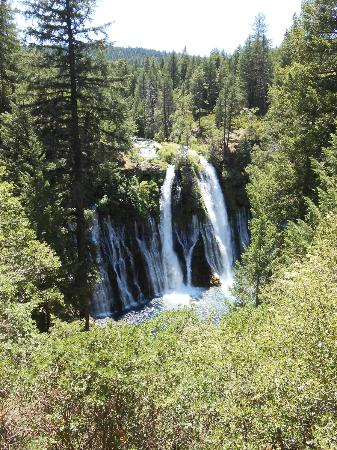 The Rex Club: Burney Falls is Beautiful