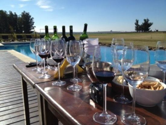 Wine tasting with The Wine Experience- Finca Piedra Winery - Uruguay