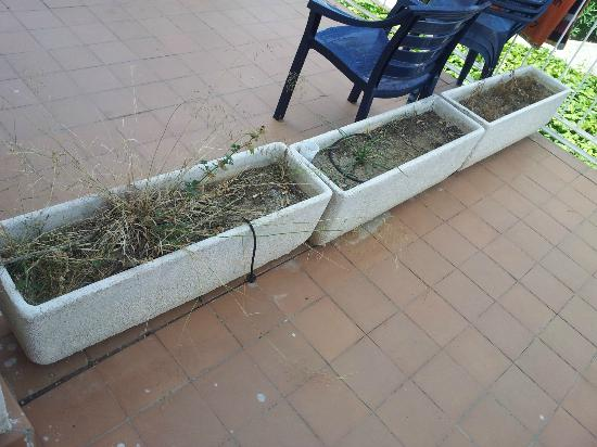 Cumbres de Salou: Dirty and poorly kept gardens