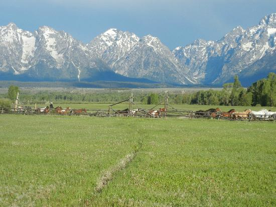 Moose Head Ranch: Bringing the horses in