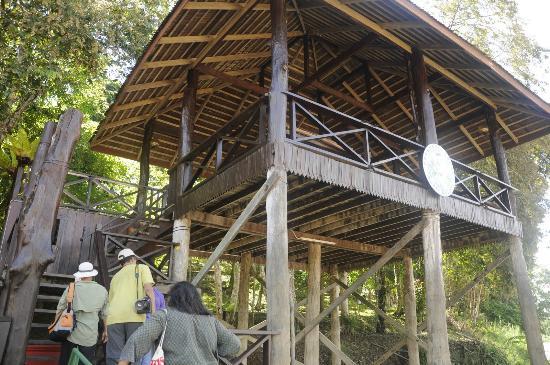 Proboscis Lodge Bukit Melapi: Landing deck
