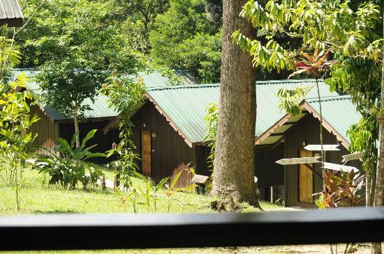 Proboscis Lodge Bukit Melapi: chalets