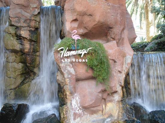 Flamingo Las Vegas Hotel & Casino: jardin