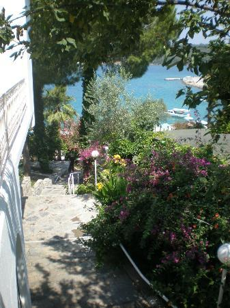 Aegean Garden: walking down to the sea