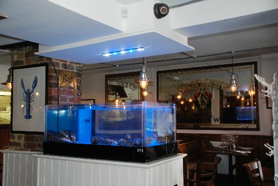 how to maintain a tank for live lobster