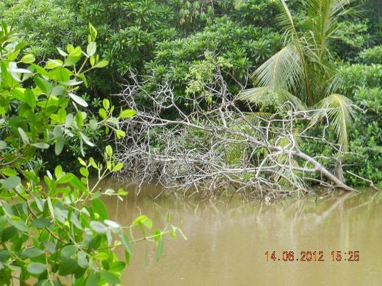 Jetwing Kurulubedda: river beauty