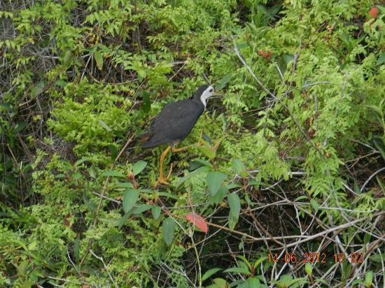 Jetwing Kurulubedda: birdsssss