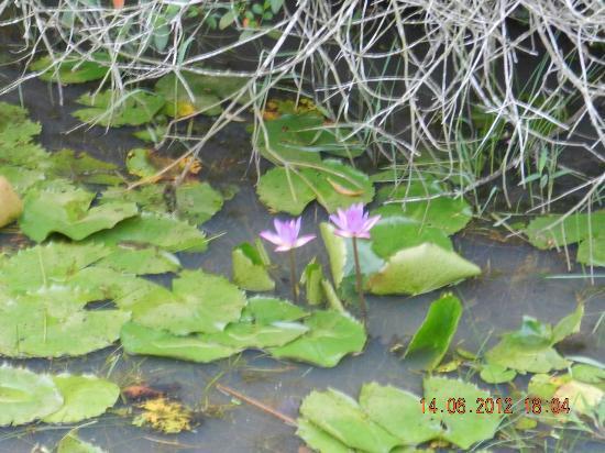 Jetwing Kurulubedda: flower