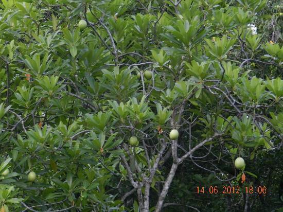 Jetwing Kurulubedda: fruits