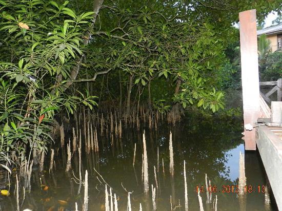 Jetwing Kurulubedda: roots of water plants