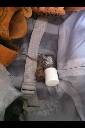 Scottish Apartments : Mouse found in suitcase in apartment!! YUK