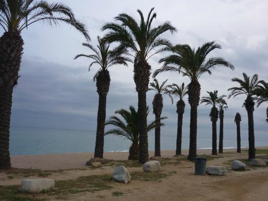 Hotel Mercury: The beach