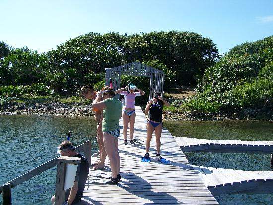 getting ready to snorkel from the dock