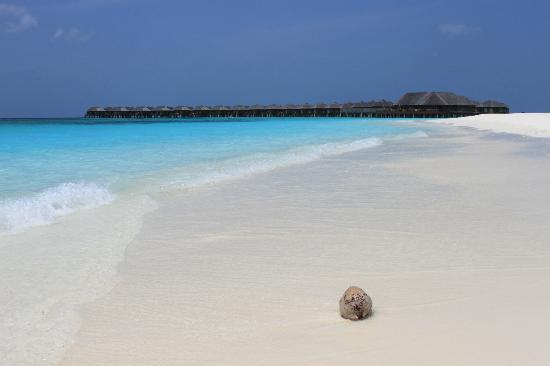 The Sun Siyam Iru Fushi Maldives: obviously fantastic beaches....