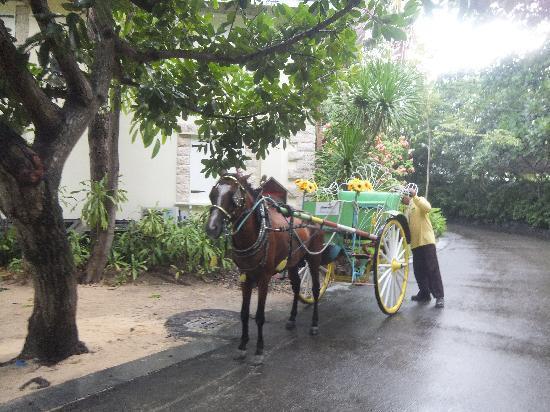 Plantation Bay Resort And Spa: 馬車