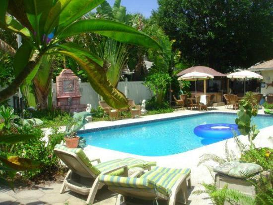 GayStPete House: Tropical pool area, with plenty of room to sun your buns!