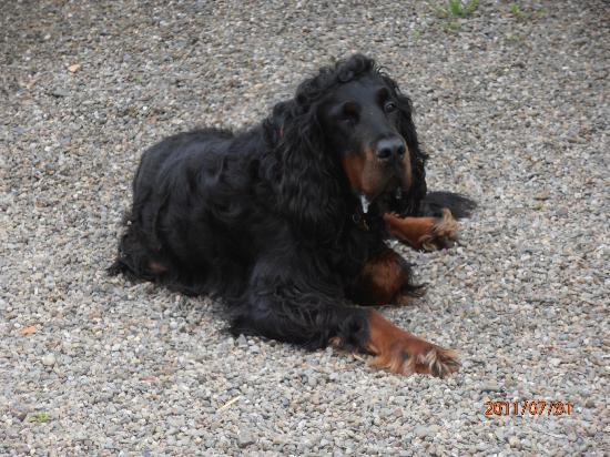 Adare Irish Cottages: Our buddy Hector