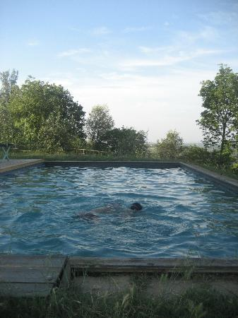 Fattoria Barbialla Nuova: the pool in the early evening