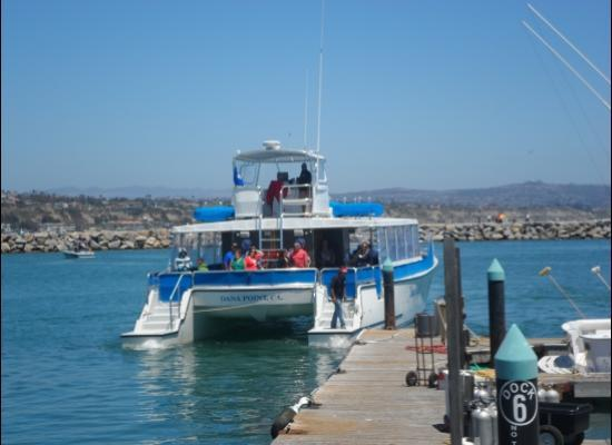 Dolphins picture of dana wharf whale watching for Dana point fishing