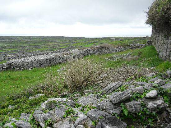 Inis Meain Restaurant & Suites: View from the fort