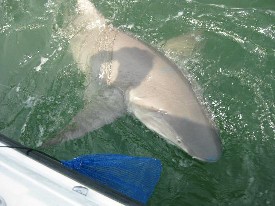 The bait picture of outcast sport fishing hilton head for Outcast sport fishing