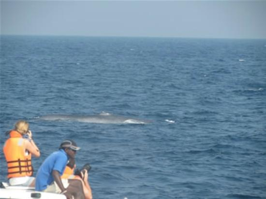 Unawatuna, Sri Lanka: Looking blue whale