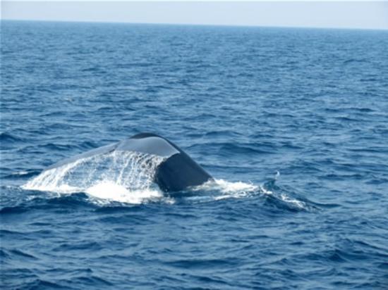 Unawatuna, Sri Lanka: Whale tale