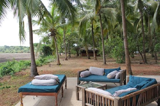 Olaulim Backyards: under the shade of the coconut trees