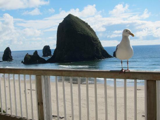 Cannon Beach: Haystack rock with friend, view from room.