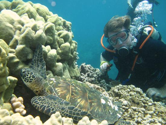 Scorpion Scuba Safaris : Honu turtle