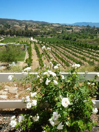 Destination Temecula Wine Tours & Experiences: Winery playing Nirvana