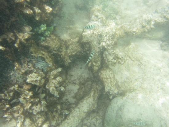 ココス アイランド リゾート , 小さな魚