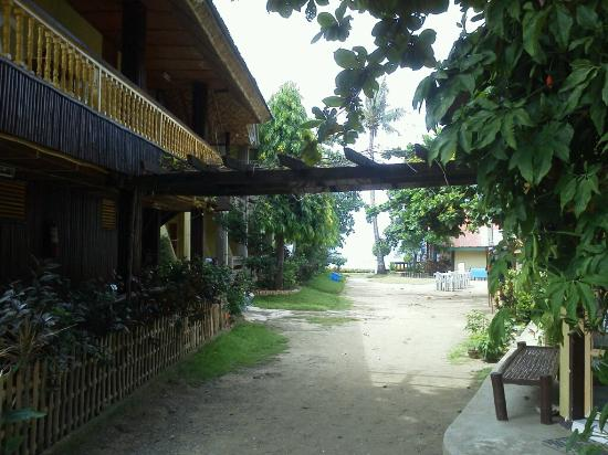 Anemone Resort and Tours, Cebu: (2)事務所から海方向へ。左はエアコンなしの部屋。先の左が我々の部屋。