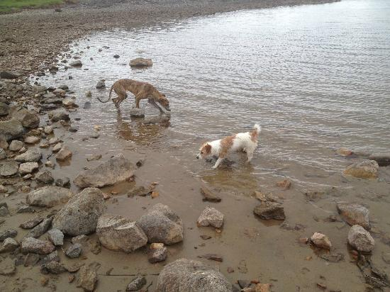 Monach House: Our dogs enjoying a day out!